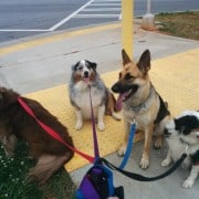 left to right; Lucy, Jake, Gabby, George